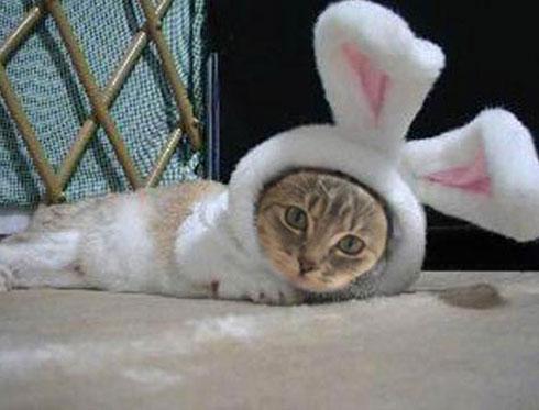 В год Кролика мясо подорожает