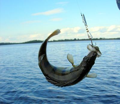 Рыбалка – отдых телом и душой