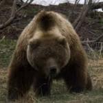 Медведь оставил мужчину без лица