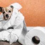 Діарея (пронос) у собак і кішок: причини, що робити і як лікувати